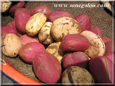 L 39 importance de la noix de cola au senegal senegalou - Petit blanc d ivoire ...