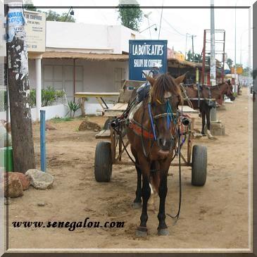 cheval-a-saly.JPG